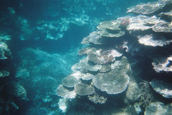 石垣島☆珊瑚