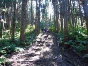 田沢かぶの途中の林