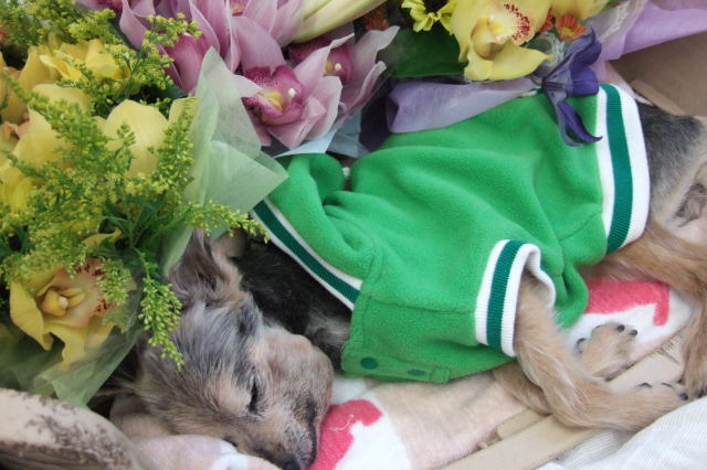 キレイなお花に囲まれて安らかなズーニー