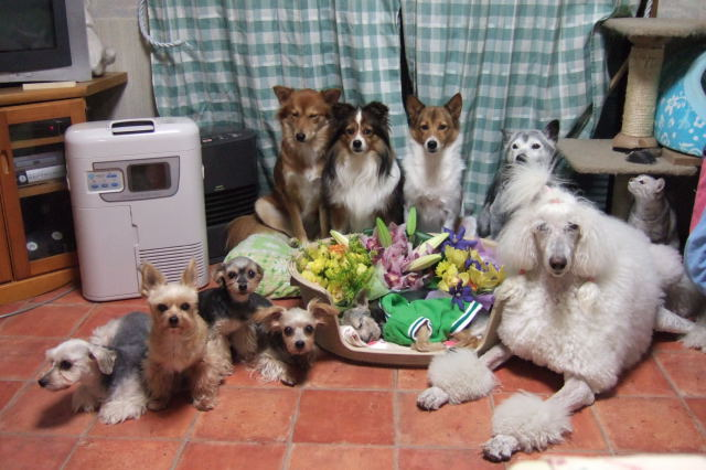 得意の家族写真。