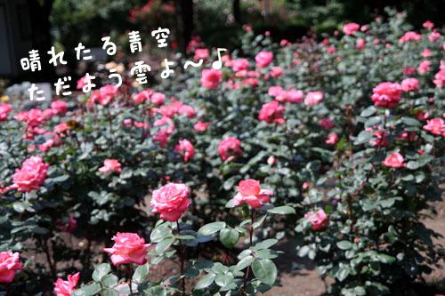 0613-4.jpg