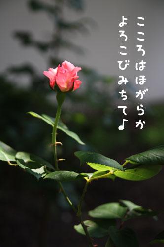 0613-5.jpg