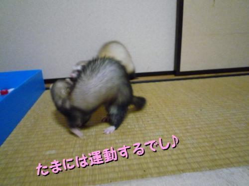 09-01-03-03.jpg