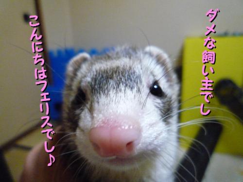 09-01-04-01.jpg