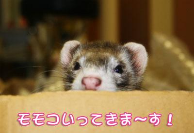 momoko_11_2.jpg