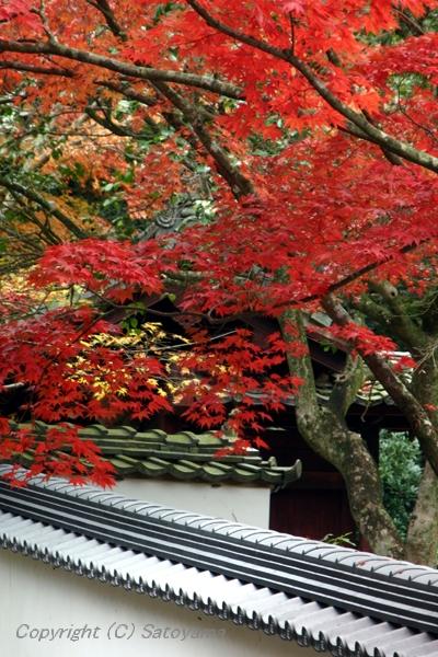 西林寺の紅葉2008