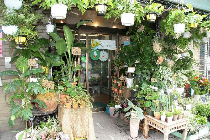 切り花、鉢植え、観葉植物ほかいろいろ取り揃えております。