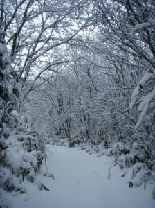 20080114雪のトンネル
