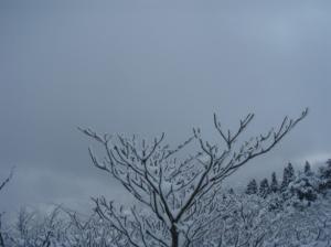 20080114鹿の角風