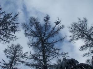 20080114雪の結晶ミタイ