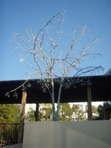 20080208ぎやまん木