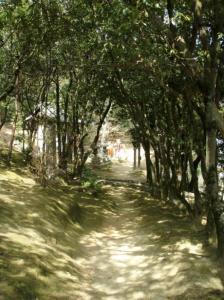 20080318円通寺2