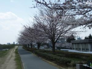 20080403桜3