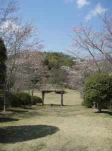 20080403桜8