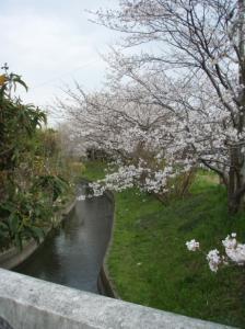 20080404桜