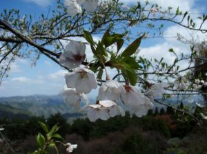 20080420弥高山5