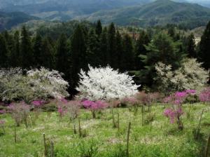 20080420弥高山7