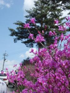 20080420弥高山10
