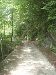 20080614コンクリ道