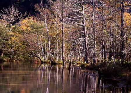 沼地の木々