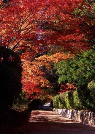 蛇腹道の紅葉