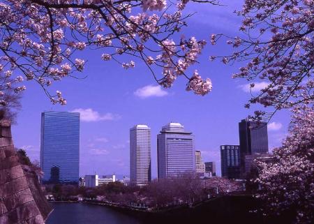 大阪城桜2