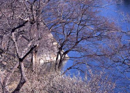 大阪城公園梅4