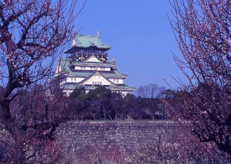 大阪城公園梅5