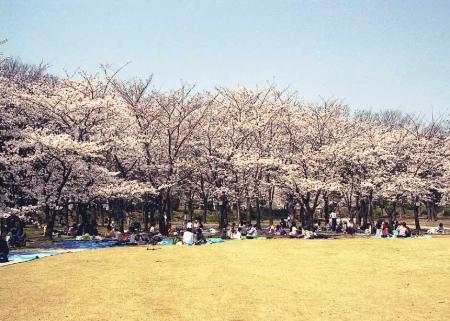 大阪城桜3