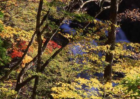 三ッ滝への道