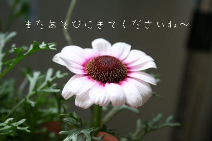 IMG_8239.jpg