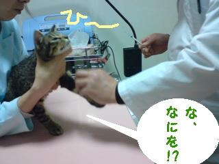 20090111043225.jpg