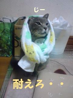 fuku-090610-1.jpg