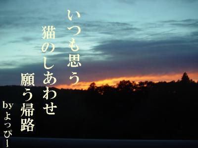 neko-090721-14.jpg