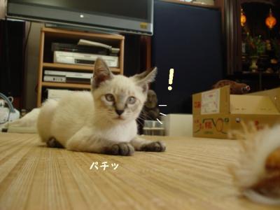 neko-090721-6.jpg