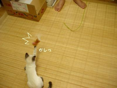 neko-090721-8.jpg