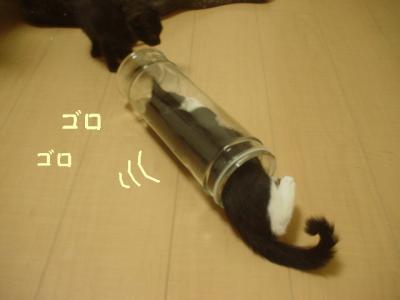 neko-090818-9.jpg