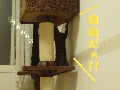 neko-091001-6.jpg
