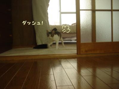 neko091016-2.jpg
