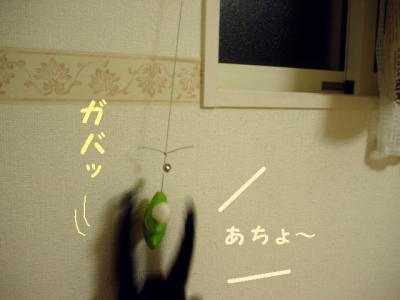 neko091121-3_20091121221542.jpg