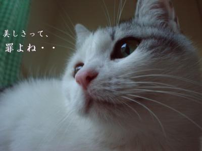 neko120201-6.jpg