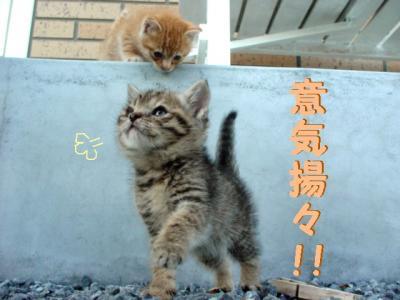 niwa-090510-4.jpg