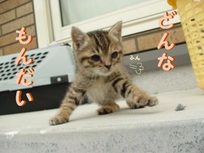 niwa-090510-7.jpg