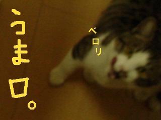sakura-081213.jpg
