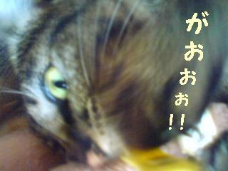 tyoko-090610-3.jpg