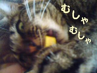 tyoko-090610-4.jpg