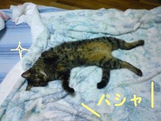 tyoko-090821-5.jpg