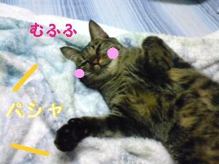 tyoko-090821-6.jpg