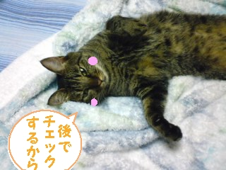 tyoko-090821-7.jpg