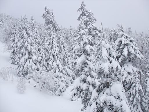 2009_0131万座スキー、090011
